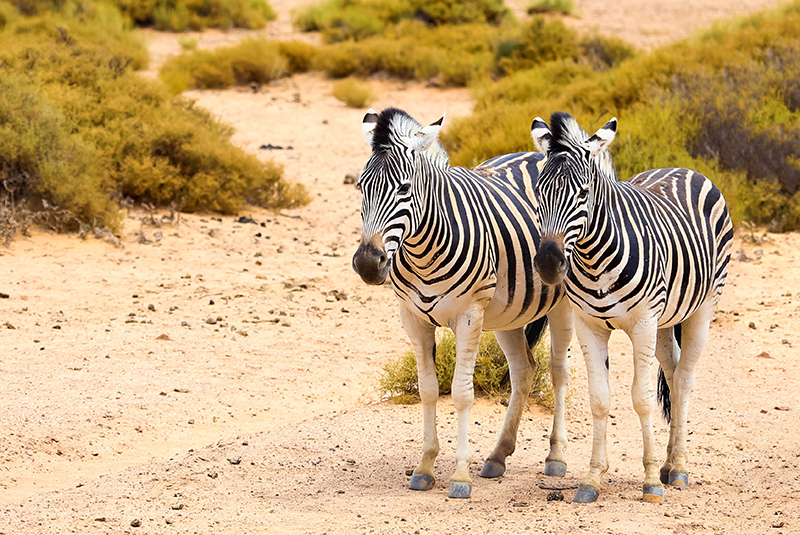 Sport Cape Town Helicopters | Tours | Safari